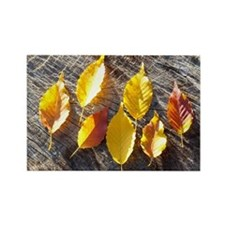 Leaves on Japanese Oak Stump Rectangle Magnet