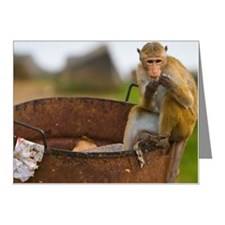 Dumpster diving monkey Note Cards (Pk of 20)