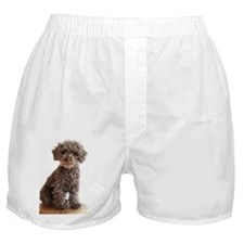 Miniature poodle sitting on wooden bl Boxer Shorts