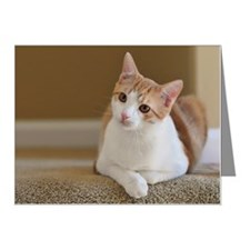 Orange cat resting on carpet Note Cards (Pk of 20)