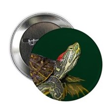 """Lively Red Eared Slider 2.25"""" Button"""