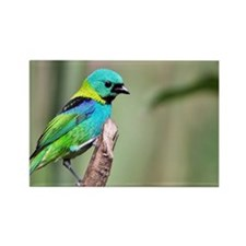 Green-headed Tanager Rectangle Magnet