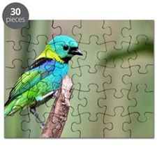 Green-headed Tanager Puzzle