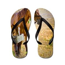 Mother horse and baby horse Flip Flops