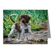 German shorthaired pointer p Note Cards (Pk of 10)