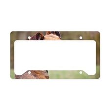 Sighthound mix License Plate Holder