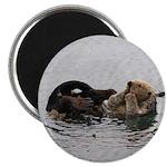 California Sea Otter Magnets
