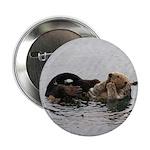 California Sea Otter 2.25