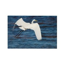 Great white egret in flight Rectangle Magnet