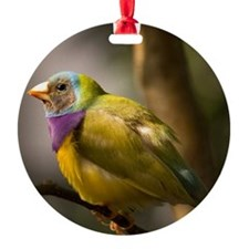 Gouldian finch Ornament