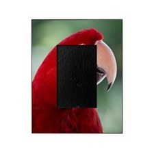 Red Macaw parrot Picture Frame