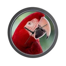 Red Macaw parrot Wall Clock