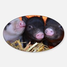 3 little micro pigs Sticker (Oval)