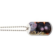 3 little micro pigs Dog Tags