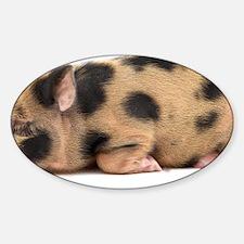 Micro pig sleeping Decal