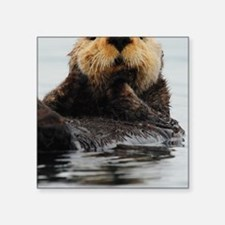 "Alaskan Sea Otter Galaxy Square Sticker 3"" x 3"""