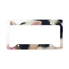 Micro pig chilling out License Plate Holder