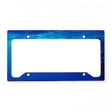 Whaleshark Magic License Plate Holder