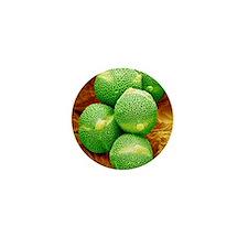 Cucumber pollen, SEM Mini Button
