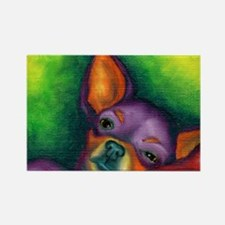 Lazy Chihuahua Rectangle Magnet (10 pack)