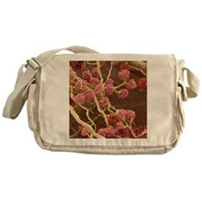 Kidney glomeruli, SEM Messenger Bag