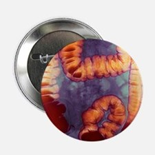 "Large intestine, X-ray 2.25"" Button"