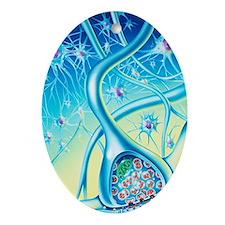 Nerve synapse Oval Ornament