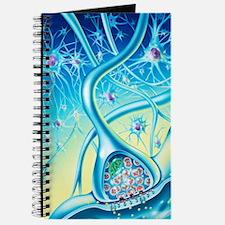 Nerve synapse Journal