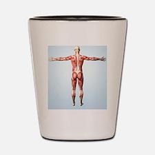 Muscular system Shot Glass