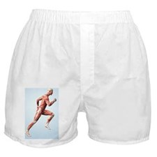 Muscular system Boxer Shorts