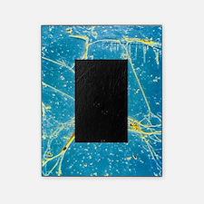 Nerve cell, SEM Picture Frame