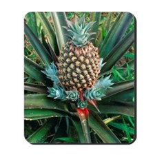 Pineapple plant with fruit Mousepad
