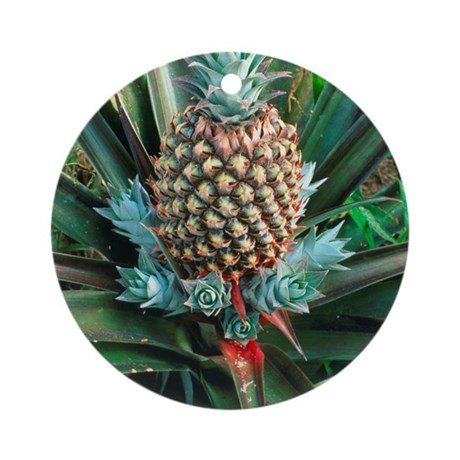 Pineapple plant with fruit Round Ornament