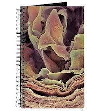 Skin surface, SEM Journal