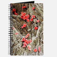 Red blood cells, SEM Journal