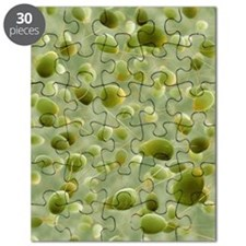 Chlamydomonas sp. algae, SEM Puzzle