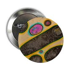 "Clostridium bacteria 2.25"" Button"