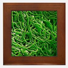 Borrelia bacteria, SEM Framed Tile