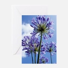 African lilies (Agapanthus sp.) Greeting Card