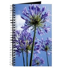 African lilies (Agapanthus sp.) Journal