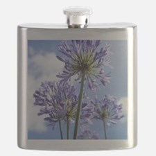 African lilies (Agapanthus sp.) Flask
