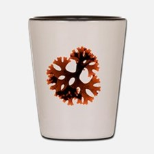 Carrageen red seaweed Shot Glass