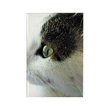 Green-Eyed White Tabby Cat Stare Rectangle Magnet