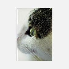 Green Eyed White Tabby Cat Starri Rectangle Magnet