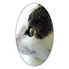 Green Eyed White Tabby Cat Starring Decal