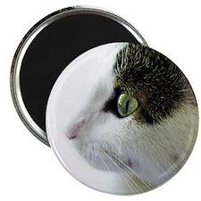 Green Eyed White Tabby Cat Profile Magnet