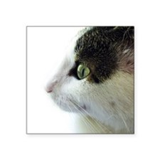 """Green Eyed White Tabby Cat  Square Sticker 3"""" x 3"""""""