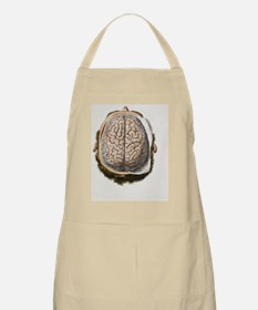 Brain meninges, 1844 artwork Apron