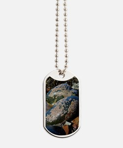 Barnacle covered boulders Dog Tags