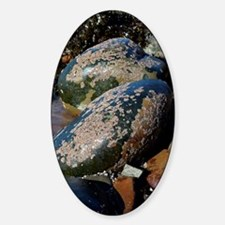 Barnacle covered boulders Decal